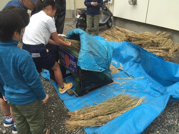 農業体験授業 脱穀2016